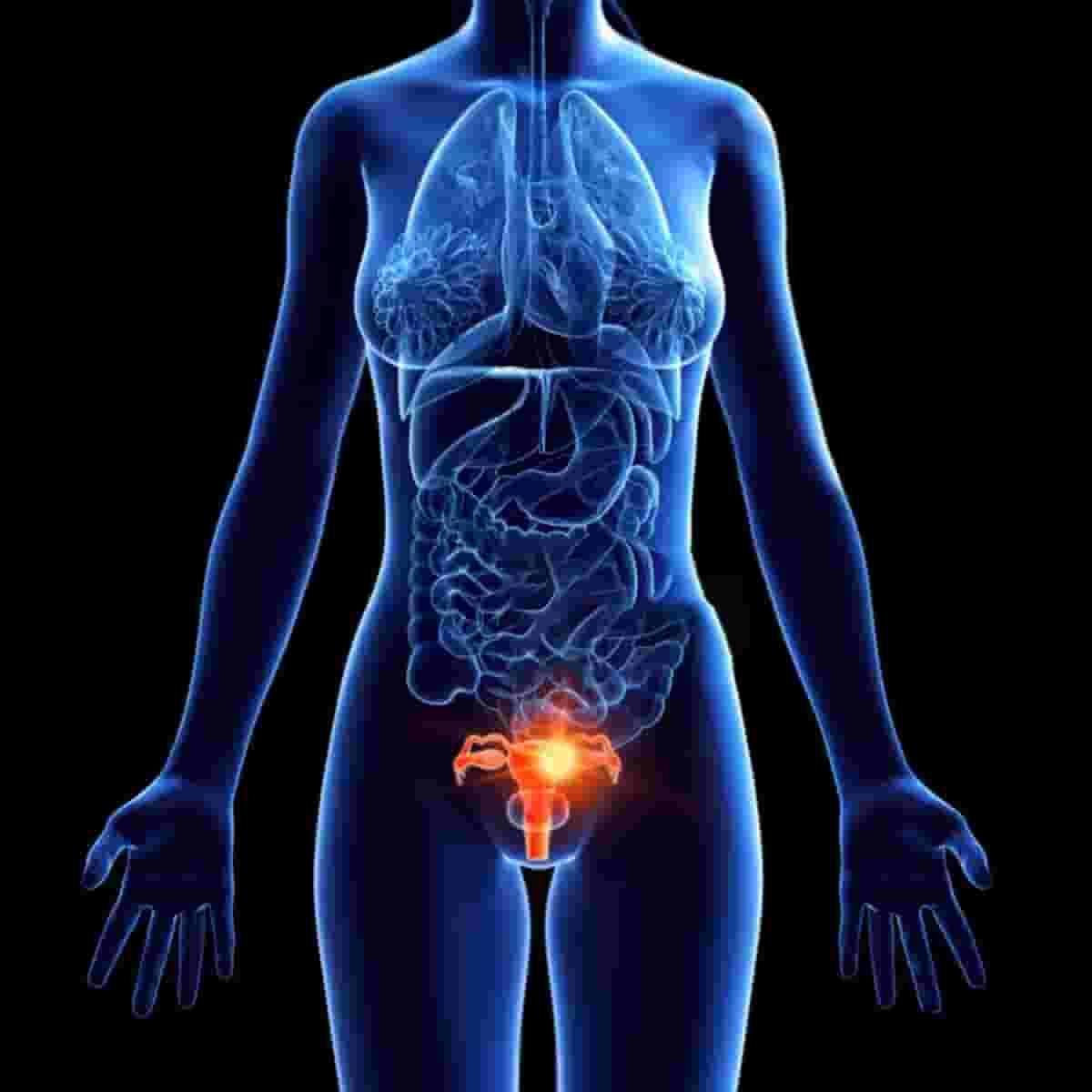 أمراض-الأعضاء-التناسلية