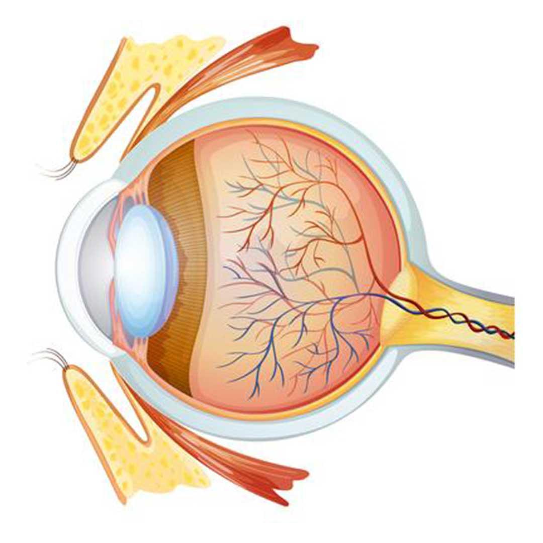 حول أمراض العيون